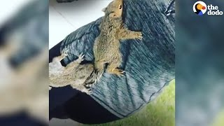 Rescue Squirrels Are Obsessed With Their Mom