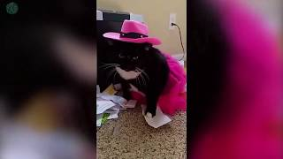 FUNNY CATS VIDEOS - BEST VIDEOS OF 2018 😹
