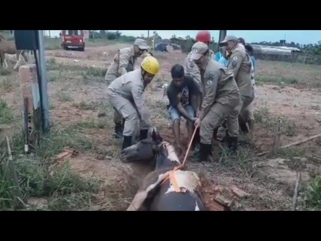 Bombeiros resgatam égua que caiu em fossa
