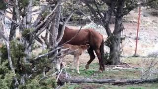 Red Lady's new foal