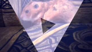 Фото моего любимого хомяка Хомы♥♥♥