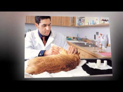 Veterinary Orthopedic Surgery | Honolulu, HI -- Gentle Vets Hawaii Kai Pet Hospital