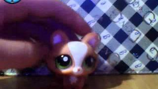 little pet shop кошки