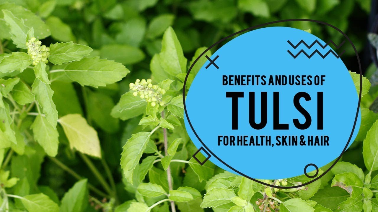 Tulsi Uses for Face & Hair Uses of Tulsi for Health(45)