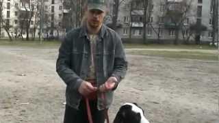 www.komne.com - Как научить собаку команде рядом.flv