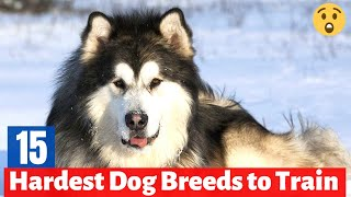 Which are the 15 Hardest Dog Breeds to Train on Earth?