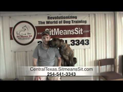 great-dane-dog-training