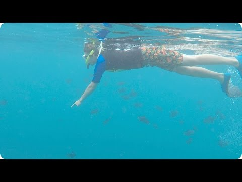 Snorkeling in Maui with Whales! | Evan Edinger Travel