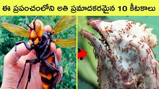 Top 10 most dangerous insects in the world | Bmc facts | Telugu