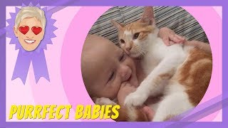 Purrfect Babies
