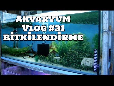 Hobihanem - Akvaryum Vlog #31 (Bitkilendirme Çalışmaları) [07.03.2017]
