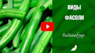 видео Фасоль овощная | Калининские сады