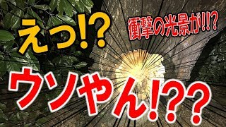 クワガタ&カブトムシ☆昆虫採集2017 9月のクワガタ採集で信じられない...