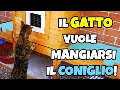 IL GATTO VUOLE MANGIARSI IL CONIGLIO! - Leonardo D