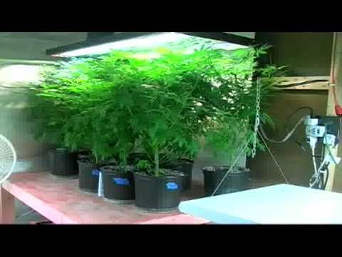 marijuana grow house in stuart youtube. Black Bedroom Furniture Sets. Home Design Ideas