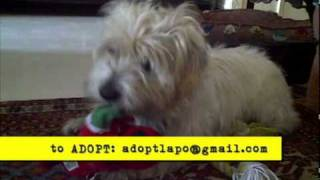 In Florida- Sweet ♥ Lapo Is Up For Adoption!