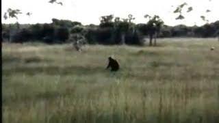 sasquatch encounters