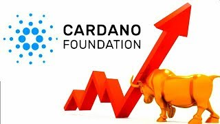 Update Cardano Bullish ADA Signs Q1 Cryptocurrency Calm Before Storm
