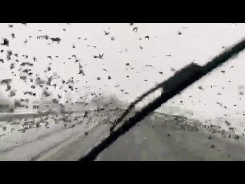 Starlings swoop on highway in snow-hit Turkey
