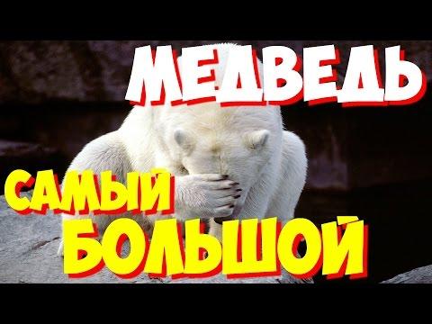Маша и Медведь Сборник В гостях у Маши Все лучшие