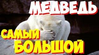 Самый большой медведь в мире – 1000 кг | Самый большой в мире медведь(, 2015-10-07T06:09:36.000Z)