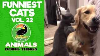 😺Try Not To Laugh Funniest Cats Vol. 22 | Animals Doing Things
