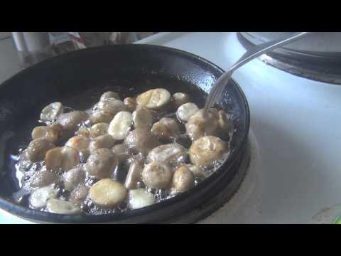 Грибы дождевики – полезные свойства и применение грибов