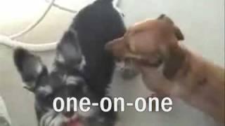 Doggie Porn Gone Wild