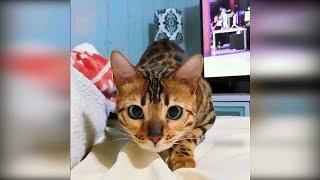 Приколы с животными 2019 февраль 21 Смешные видео про котов и собак лучшие приколы с котами до слёз