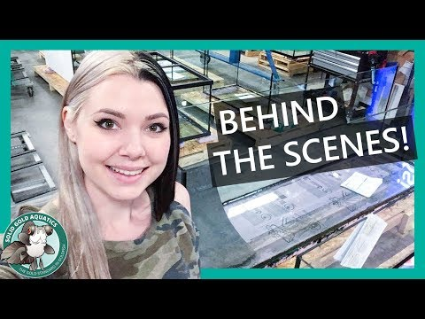 Behind-the-Scenes At An Aquarium Manufacturer // Custom Aquariums