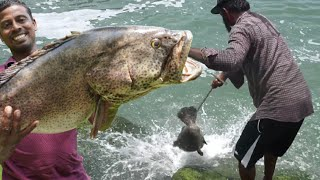 കൈ ചൂണ്ടയിൽ 12 kg.... 😳😳/12 Kg Hamour Catch Through Hand Line From Sea