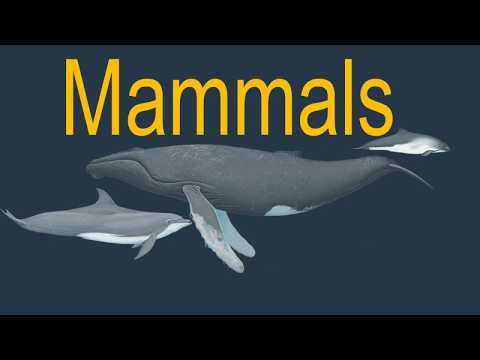 What Is The Difference Between Whales, Dolphins And Fish? | Whale And Dolphin Conservation