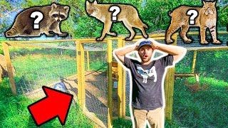 PREDATORS Broke into GIANT ANIMAL ENCLOSURE!!! - They're All Gone....RIP (We Caught the Predator)