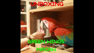 UNBOXING GREEN WINGS MACAW name TIGER