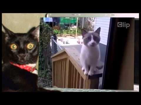 Talking Tom | Mèo nói tiếng người cực vui nhộn | xem xong cười lăn lộn