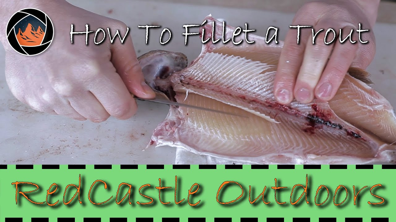 How To Fillet A Trout The Right Way Youtube