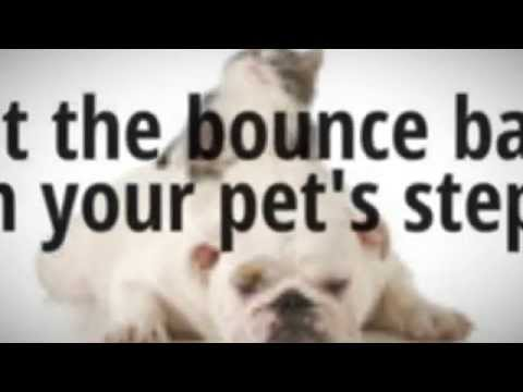 Healthy pet - Best Multi-Vitamins to give your pet Get Up and Go!!