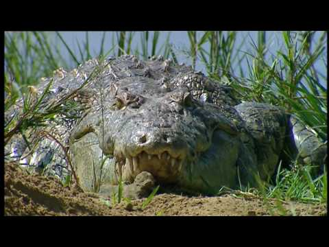 Conflicts Of Nature : Conflicts In A River (Wildlife Documen