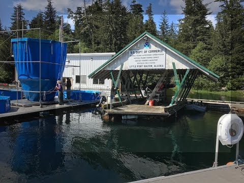 Tour of Little Port Walter Marine Research Station, Alaska