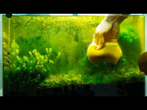 Aquarium Algae Problems, Algae Eaters - Aquarium Plants 101