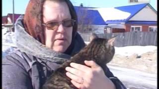 В Кирове началась выездная вакцинация домашних животных (ГТРК Вятка)