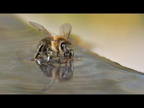 باحثون يدربون النحل لاكتشاف فيروس كورونا  - 19:00-2021 / 5 / 10