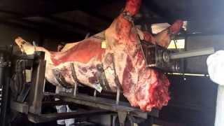 Mise en place du bœuf dans le barbecue,16h de cuisson ! Charolais lorrain de 425 kg.