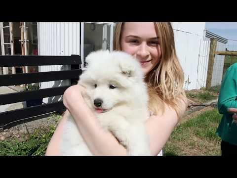 Road trip - Picking up my Samoyed puppy Luna