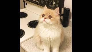 Cat talking to Fly - The cutest cat ever!!!! Кот разговаривает с мухой!!! Супер круто!!!