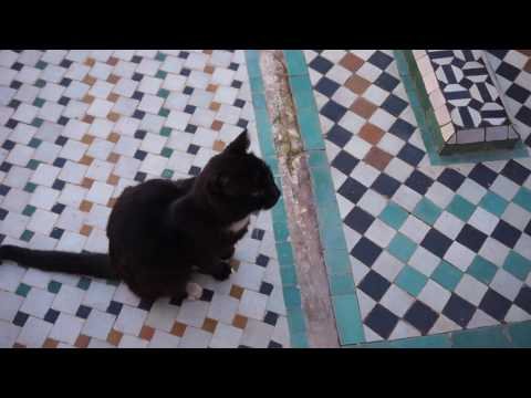 cute kitty at the Saadian Tombs in Marrakech (January 28th, 2017)