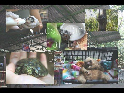 CR ADVENTURE | Arrival and Costa Rica Animal Rescue Centre