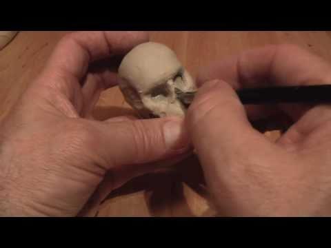 Sculpting a Human Skull-part1