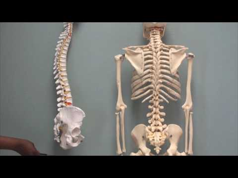 Osteology of the vertebral column