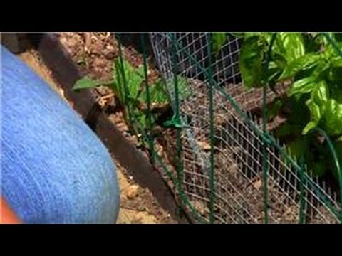 Vegetable Gardening How To Get Rid Of Rabbits In